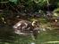 Под водой рыбы,на воде утки в выводком плещутся.